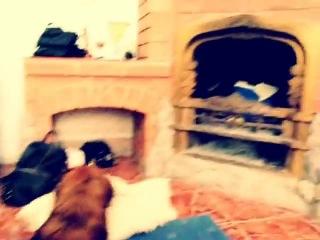 Извращенная собака(2) смотреть онлайн бесплатно, без регистрации, без смс.